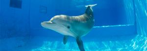clearwateraquariumWINTER